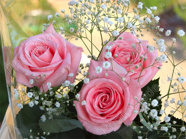Чайно гибридные розы и грандифлора